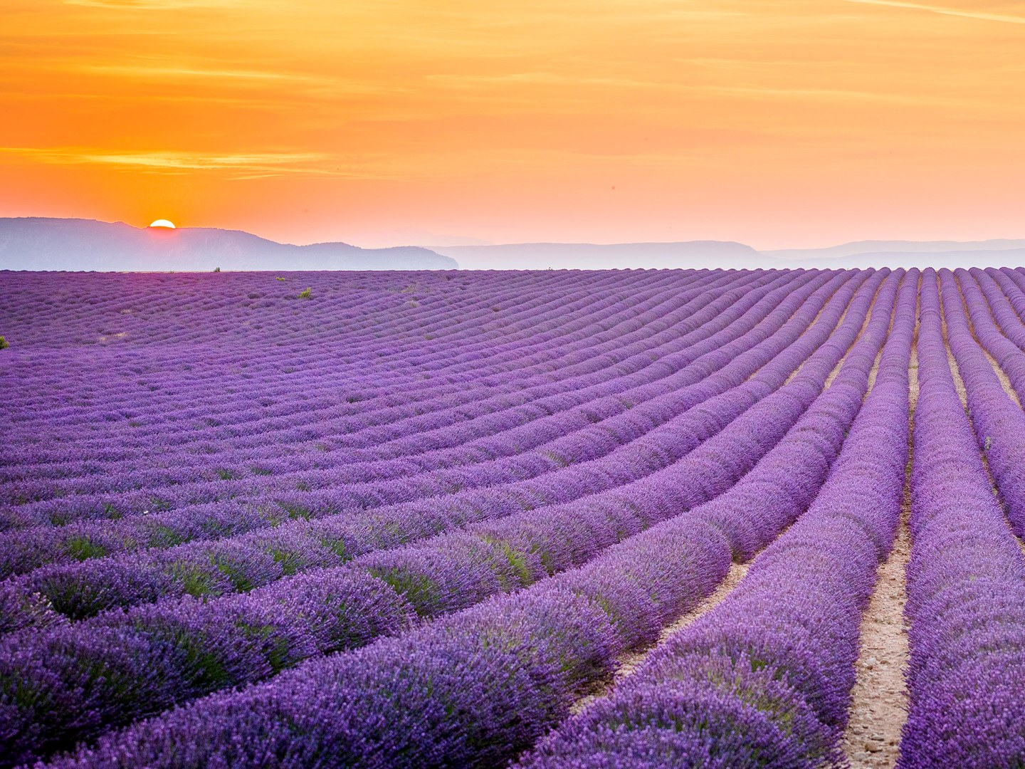 lavender-field-provence-cr-alamy